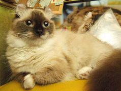 ディーカッツェ Die Katzeのおすすめポイント1