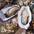≪カキ≫牡蠣にはたくさんの栄養素が含まれていて、たんぱく質をはじめ、カルシウム、亜鉛などのミネラルが豊富に含まれています!カロリーは低めでとってもヘルシー、女性の方に多い貧血などにも牡蠣に含まれる鉄分で解消が期待できます!亜鉛が多く含まれているので、牡蠣を食べて免疫力アップで健康的な体を作ります♪