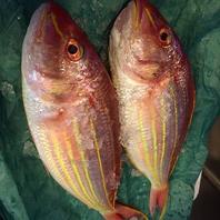 旬と鮮度にこだわった魚の仕入れ