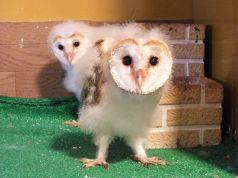 Cure Owl キュアオウルのおすすめポイント1