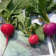 食の安全を意識し、無農薬野菜を使用しております