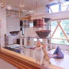 かぎのしっぽ SAKURAZAKA Cafeの雰囲気1