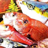 【厳選した旬の鮮魚】たち