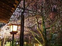 自然を感じる散策【日本庭園と遊歩道】