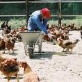 自社養鶏場で管理している為、安心安全!