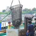 三浦三崎漁港から買参権を持ち、毎日市場から新鮮な鮮魚を仕入ています。