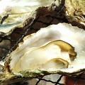 料理メニュー写真広島産 蒸し牡蠣