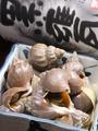 料理メニュー写真つぶ貝の煮付け