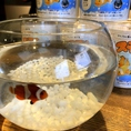 【お洒落に作れる小さな海☆スモシー】海水魚を手軽に飼育出来る、最先端の新しい飼育技術のキット「スモシー」。エアポンプやフィルター要らずなので、費用も少なくお手入れも楽々♪店内で販売しております!