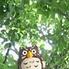 ふくろうの森のロゴ