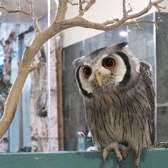 LUCKY OWL 難波の写真