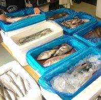 日本一の漁獲量の「銚子」