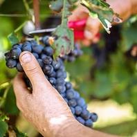 《直輸入ワイン》