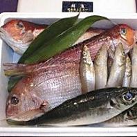 質のいい鮮魚の仕入れと管理を徹底しております◎