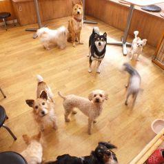 保護犬カフェ&レストラン 東道頓堀のおすすめポイント1