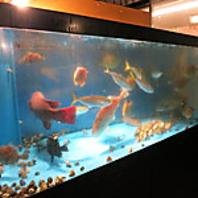 水槽の中には新鮮な魚がたくさん!