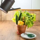新鮮野菜のカジュアルイタリアン occhiali オッキアーリ 新宿東口店特集写真1