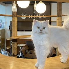 猫カフェcota