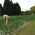 お客様へ提供する野菜を自社農園「さくら農園」で丁寧に育てています。