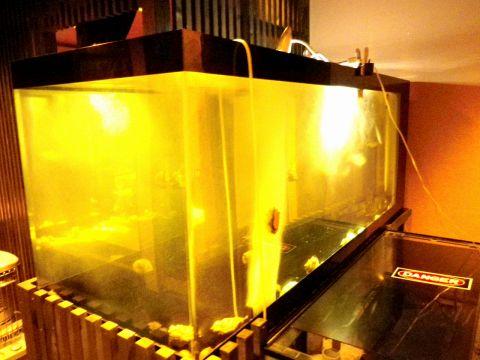 店内には、大きな水槽が。中で泳ぐ魚が、店主の腕によりおいしい一品へと変わる。