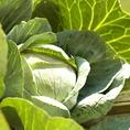 【種と土からつくる味】ヘンリーインで提供する料理は、ほとんどが地元・滋賀県産の食材からつくられています。 なかでも、野菜・お米は自家農園で収穫したものを使用しているので、格別に新鮮でおいしいです。 無農薬でたっぷり愛情をこめて育てられた野菜たち。見た目は悪いですが、おいしい野菜なのです!