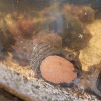 「旨い魚の食える店」★最上級の鮮魚を提供しています!
