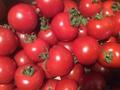 料理メニュー写真採れたてトマト