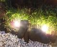 ライトアップされたお庭。