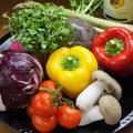 料理メニュー写真きのこのサラダ・パリパリッとサラダ・トロッと温玉シーザー・フワッとスクランブル