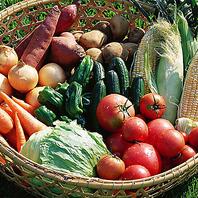 新鮮な朝獲れ野菜を味わう
