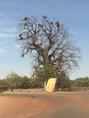 ★オーナーの旅写真★西アフリカマリのバオバブ!
