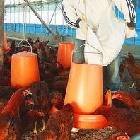 日本三大地鶏『比内地鶏』