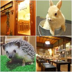 小動物カフェあにまる荘の写真