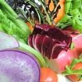料理メニュー写真新鮮!季節野菜のバーニャカウダ