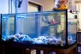 店内の水槽にはあわびやさざえなど貝類が中心にリースナブルな価格で提供しています。、かさごなどの活魚がおよいでいることもあります