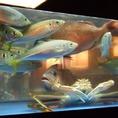 水槽で泳ぐ新鮮な鮮魚!