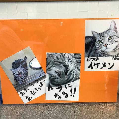 店内にはいたるところに猫の写真が…!実は店名の由来にもなったペットの猫≪鼓太郎くん≫猫好きの店主と猫トークに花をさかせてみてはいかがでしょう♪
