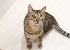 猫カフェ リプミィのおすすめポイント1