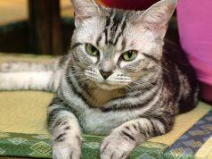 猫家 ふく福のおすすめポイント1