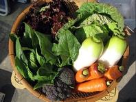 自社農園の元気野菜を使用しております!