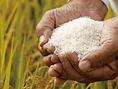 【お米へのこだわり】山都町の米を高温のガス釜で炊き上げます。お米は常に精米したてのものを極めて純度の高いシーガルフォーのお水を使い高温のガス釜で炊き上げます。