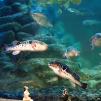 素材にこだわり尽くした天然の鮮魚をご提供。