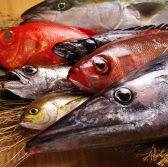 日本橋 イカセンターのおすすめ料理3