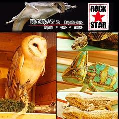 爬虫類カフェ ROCK STARの写真