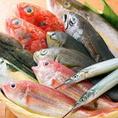 日本全国から毎日直送される当店の鮮魚は、その日にあがった新鮮で質の良い魚を目利きして仕入れていただいております。市場直送の旬の鮮魚のお造りはご宴会にもぴったりです!
