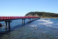 雄島で、現役の海女が採ってくる新鮮な魚介類はうまい!