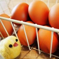 【契約農家から直送!!千葉県産若鶏卵を使用】