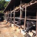 オーナー自ら、畜産農家に出向き、仕入れるこだわりのお肉。