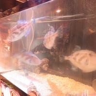 店内の水槽で海鮮の鮮度をキープ!