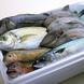 鮮度にこだわりあり!毎日仕入れる朝採れ鮮魚